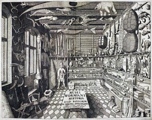 """Musei Wormiani Historia"", the frontispiece from the Museum Wormianum depicting Ole Worm's cabinet of curiosities."