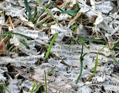 newspaper-in-field